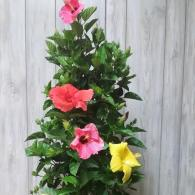 Hibiscus Hollywood Column Tricolor 10