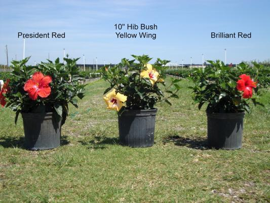 [Image:  We Carry A Variety Of Blooming Plants Available For Wholesale!]